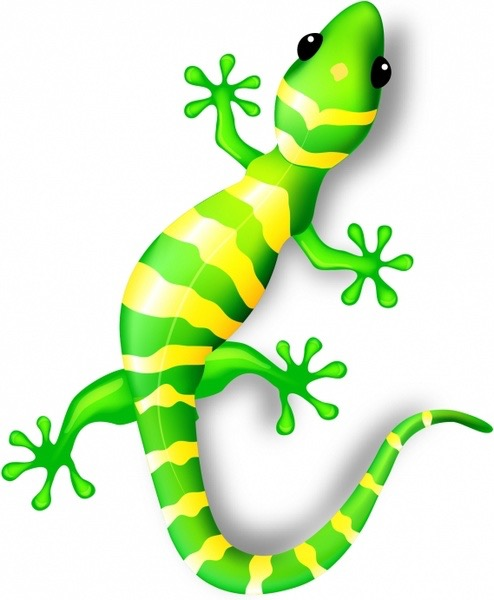gecko_312575